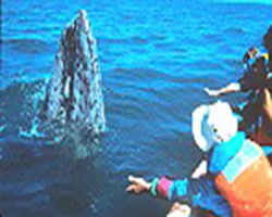 LA Whale Watching tours in LA and San Pedro