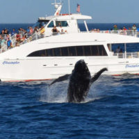 whale watching in los angeles and long beach