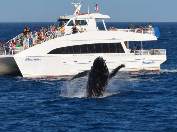 La Whale Watching Best Whale Watching Cruises